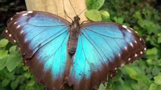 Le Papillon. Con Subtítulos en Español