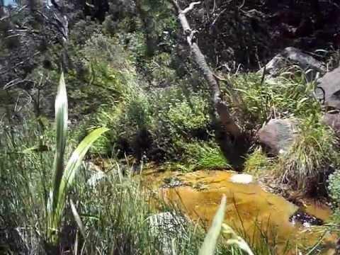Little stream on Table Mountain