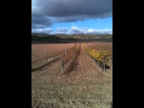 Short Navarran Landscape
