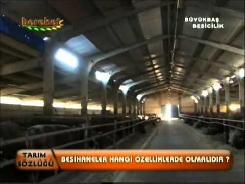 Büyükbaş Besiciliği - Aytaç Tesisleri - Bereket Tv (Toprak Tv) 'Bölüm 1 [1/2]