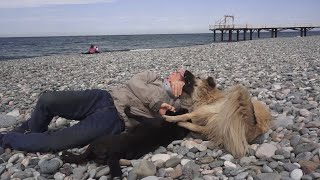 A day on the beach with our street dog friends