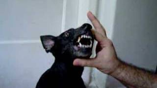 Cachorro falante - Talking dog