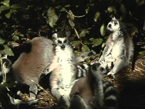 Lalibela Game Reserve & Garden Route Tour South Africa