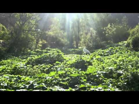 Issaguen ( LAZAL-IGHIRAD-WINTOUD) partie 2
