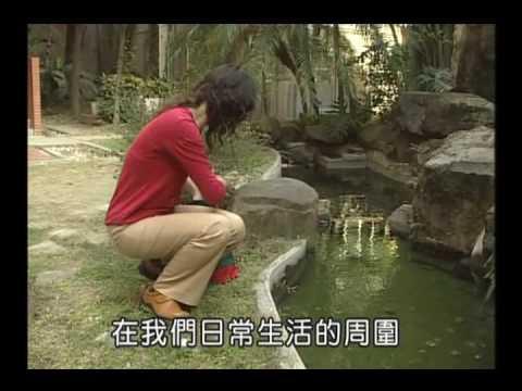 國小_自然_介紹水域【翰林出版_四上_第二單元 水生生物的世界】 - YouTube