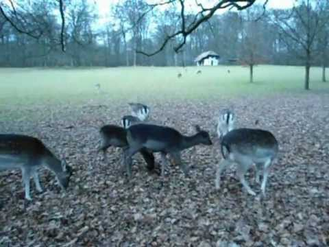arnhem deer park