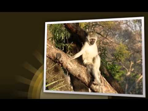 South Africa 2010.mp4
