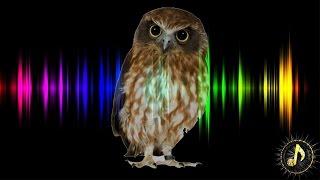 Owl Hoot Sound Effect