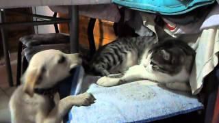 Convivencia entre perra y gata!!!