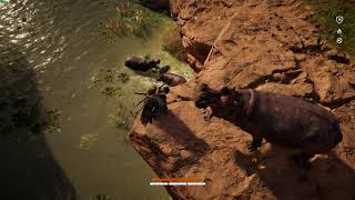 Assassin's Creed Origins - 2 Hippo`s VS 1 Crocodile