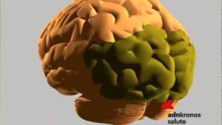 Scoperta molecola che rende più aggressivo cancro al cervello  ...