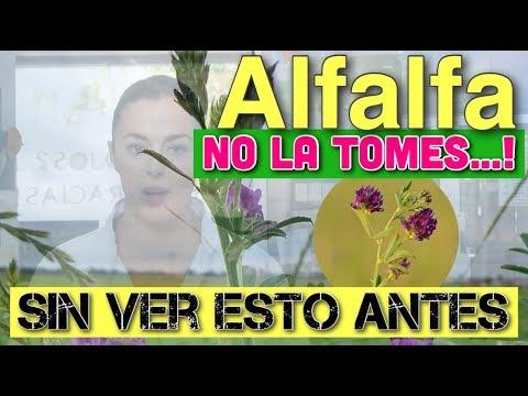 Alfalfa: No la tomes sin ver esto antes (Vídeo)