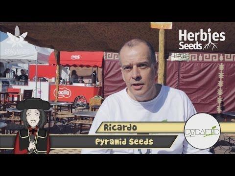 Pyramid Seeds @ Spannabis 2014 Barcelona
