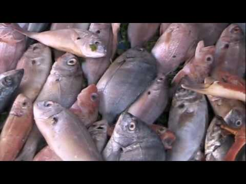 The Interesting Fish Market – Essaouira, Morocco