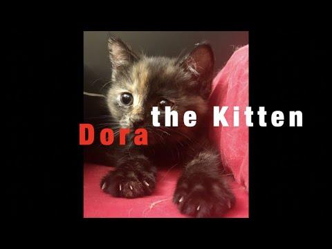 Dora the kitten born without an anus