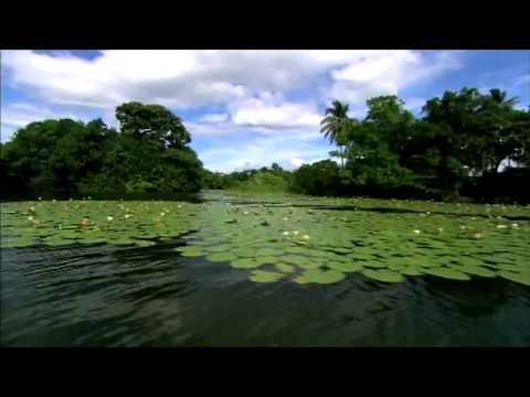 Alive NICARAGUA