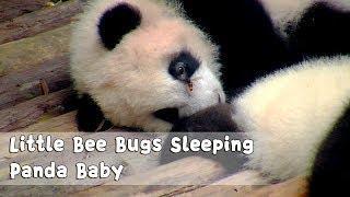 Little Bee Bugs Sleeping Panda Baby | iPanda