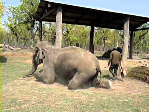 Chitwan Nepal – Elephants