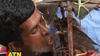 wildlife news of Hobigonj, Bangladesh---Bird Lover