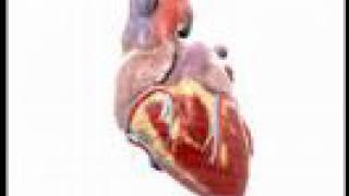 Understanding Heart Disease (Heart Basics #1)