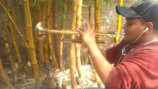Despacito trompeta