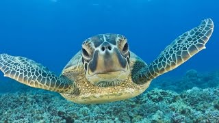 Swimming with Sea Turtles: Beautiful Surprises Underwater