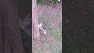 O arranhador do Alone, o doce gato de rua