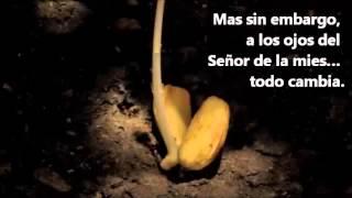 Video el sembrador, la tierra y la semilla