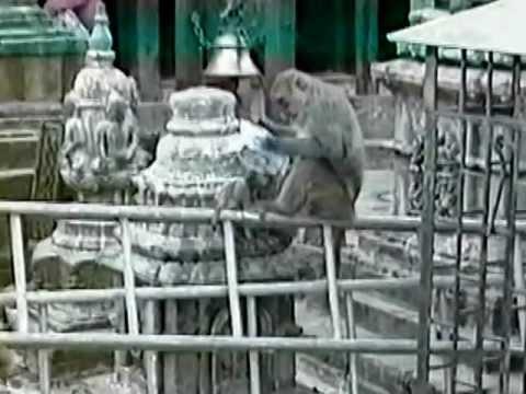 Tibetan Odyssey – Swayambhunath Stupa (11)