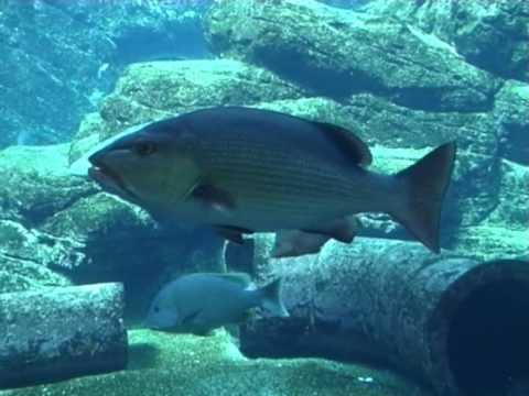 Oceanarium w Durbanie 5/8