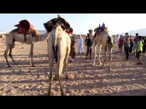 Egypt :)  Dahab Festival 2012