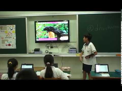 探索小雨燕 - YouTube