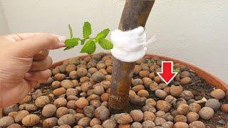 Isto vale ouro para se livrar das formigas nas plantas!