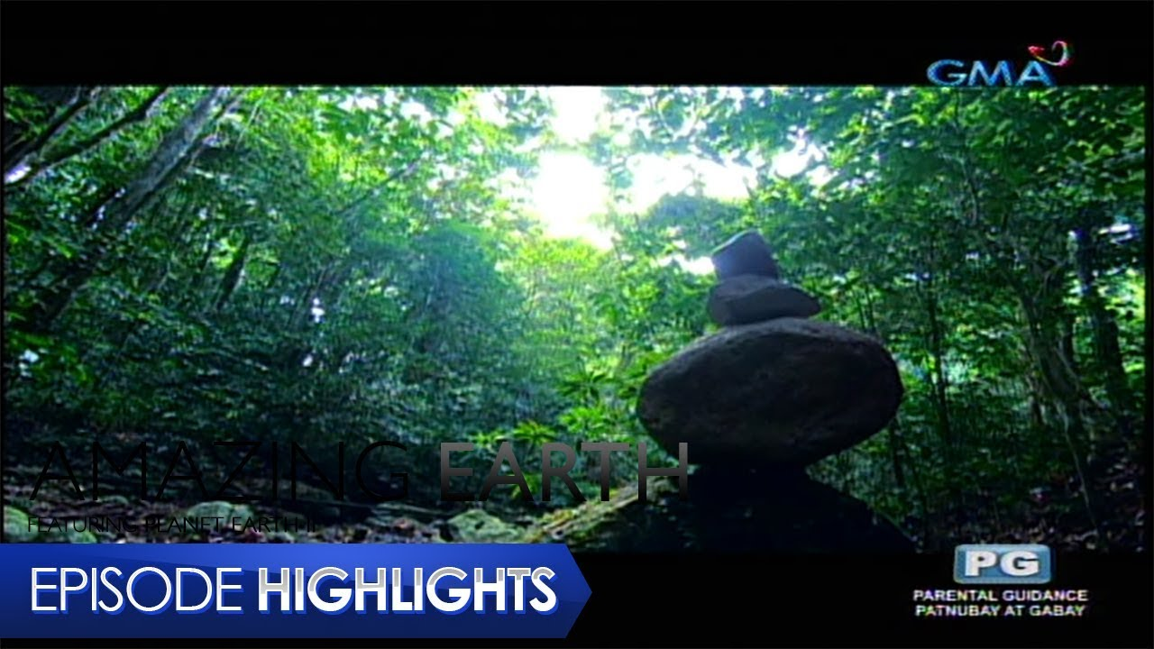 Amazing Earth: The Mysterious Forest