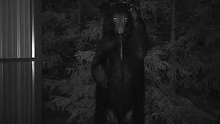 Black Bear Spotted in Sodus, NY