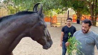 Salman Khan Farm House & SAYYAD FAMILY Farm House Gorai Beach Uttan