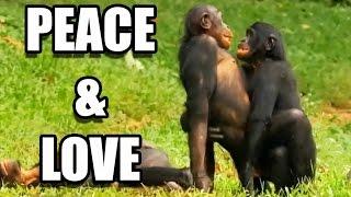 Sexe : les bonobos ont-ils tout compris ? - ZAPPING SAUVAGE width=