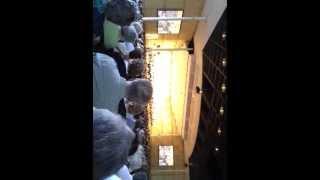 Tchaikovsky's 1812 Overture, Ravinia, 7/29/12: Live Cannon!