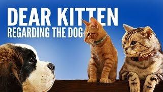 Dear Kitten: Regarding The Dog
