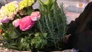 Tipps von der Floristmeisterin - Blumenreich in den Frühling