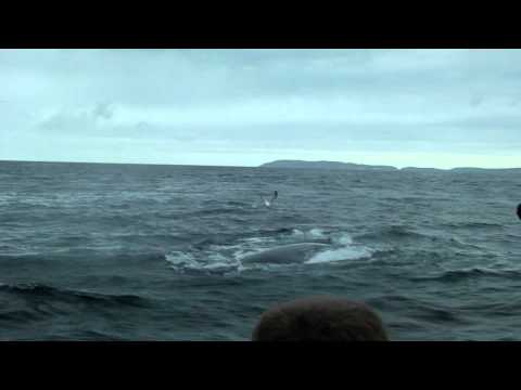 Whale watching…in South-Africa