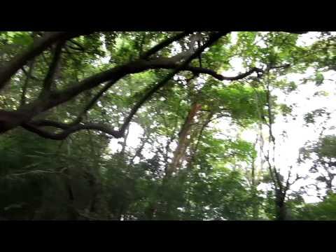 Charco Verde National Park – Ometepe, Nicaragua – Monkey
