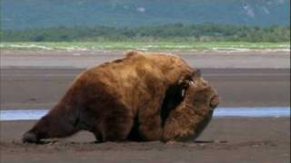 "Grizzly Man - 14. ""Bear Fight"""