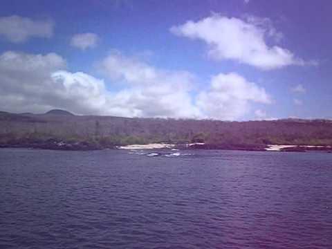 Ecuador   Galapagos   Sea Lion Floriana part 3