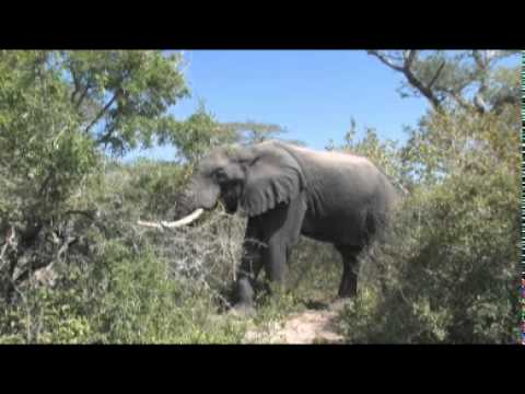 Phongolo Game Reserve – South Africa Travel Channel 24
