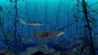 Aquagen ft Rozalla - Everybody's Free