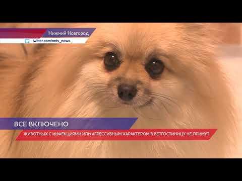 Ветеринарные гостиницы города Нижнего Новгорода