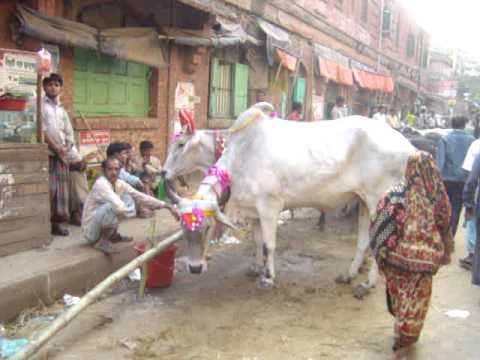 Dhaka Cattle Market