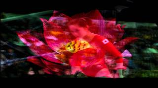 Koko Tsurumi~ Lotus Blossum