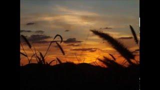 zaiko langa langa --- melkweg 1990 chanson 12 encore --- baniongo
